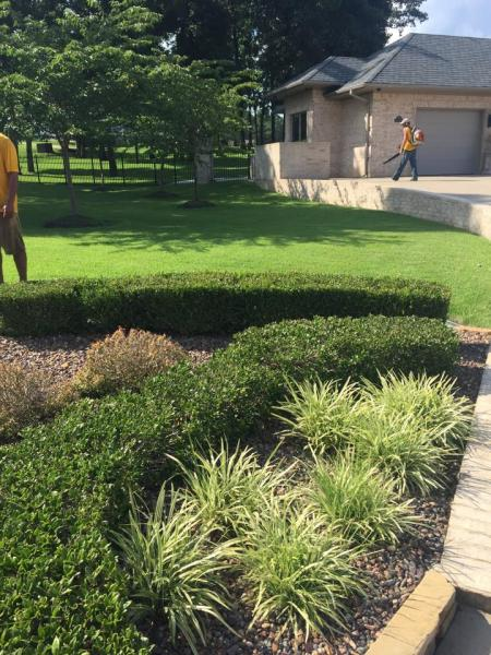 Palisades zoysia grass grows in part shade as well so it is a popular choice for homeowners and business owners alike!